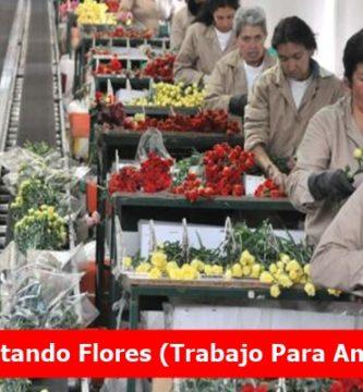 Empleo Alistando Flores